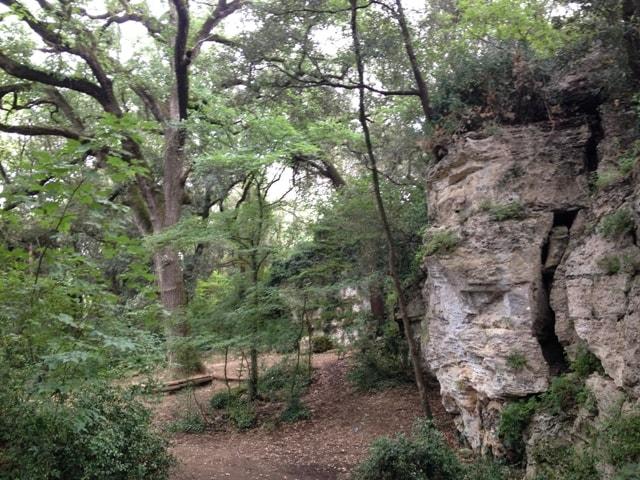 roures ufanosos al bosc de Les Estunes